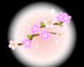 桃の花2.jpg